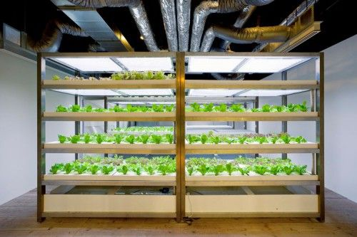 Pasona Urban Farm that grows rice to tomatoes by using both hydroponic and soil based farming