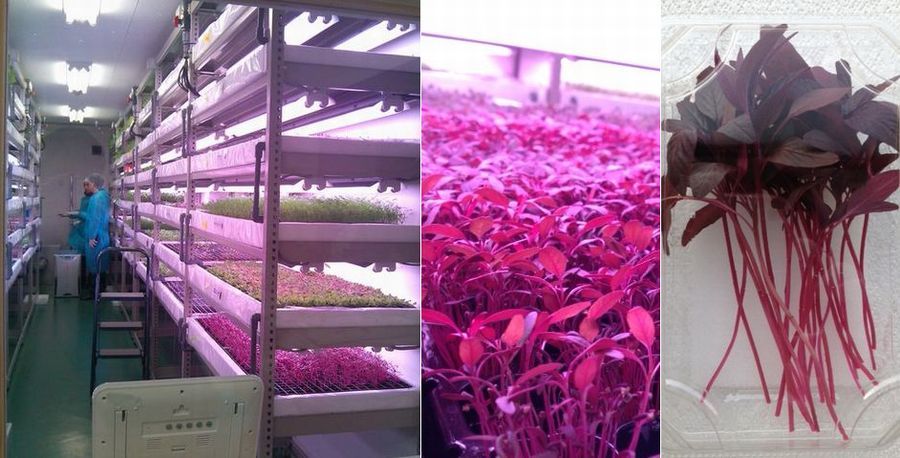 IndoorFarm about Functional Plants