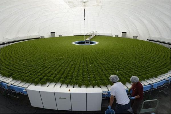 Dome-Shaped Greenhouse, Granpa leads high-tech revolution in farming