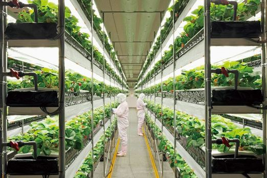 Vertical Farming, Plant Factory Market Shares 2014 To 2020