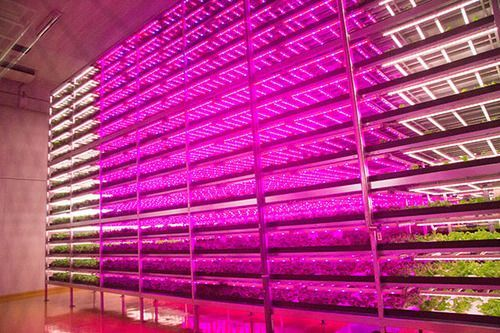 World's Largest Plant Factory With LED Lighting Built In Quake-Hit City Miyagi
